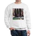 The Redwood Highway Sweatshirt