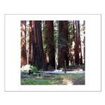The Redwood Highway Small Poster
