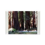 The Redwood Highway Rectangle Magnet (100 pack)
