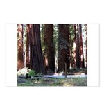 The Redwood Highway Postcards (Package of 8)