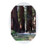 The Redwood Highway Oval Ornament