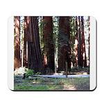 The Redwood Highway Mousepad