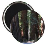 The Redwood Highway Magnet