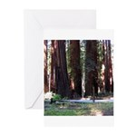 The Redwood Highway Greeting Cards (Pk of 10)