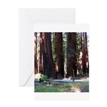 The Redwood Highway Greeting Card