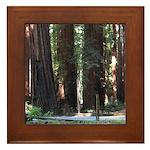 The Redwood Highway Framed Tile