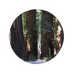 The Redwood Highway 3.5