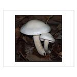 White Mushrooms Small Poster