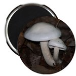 White Mushrooms Magnet