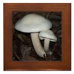 White Mushrooms Framed Tile