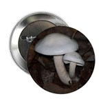 White Mushrooms 2.25