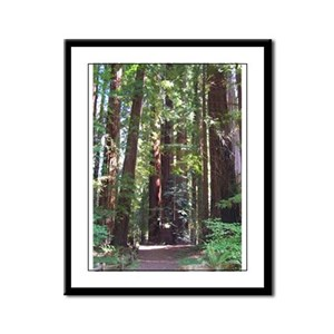 Redwood Grove Trail Framed Panel Print