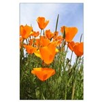 Tall Poppies Large Poster