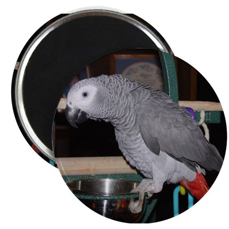 """African Grey 2.25"""" Magnet (100 pack)"""
