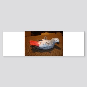 African Grey Bumper Sticker
