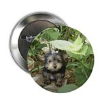 """Yorkshire Terrier 2.25"""" Button (10 pack)"""
