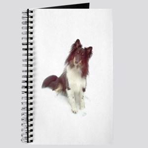 Curious Sheltie Journal