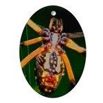 Spider Woman Oval Ornament