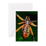 Spider Woman Greeting Cards (Pk of 20)