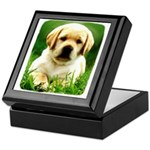Yellow Labrador Puppy Keepsake Box