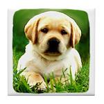 Yellow Labrador Puppy Tile Coaster