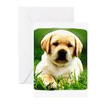 Yellow Labrador Puppy Greeting Cards (10/pk)
