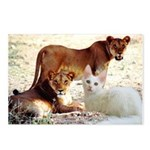 Turkish Angora Postcards (Package of 8)