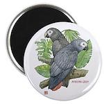 Tropical African Greys 2.25