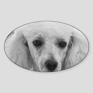 Poodle dog Sticker