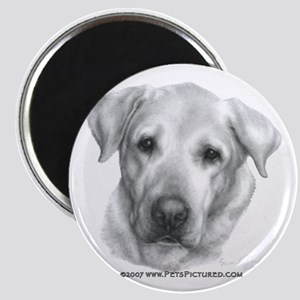 Alex, Labrador Retriever Magnet