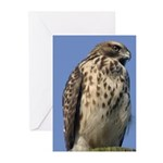 Red-shouldered Hawk Greeting Cards (Pk of 10)
