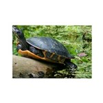 Redbelly Turtle Rectangle Magnet