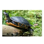 Redbelly Turtle Postcards (Package of 8)