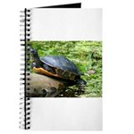 Redbelly Turtle Journal
