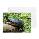 Redbelly Turtle Greeting Card
