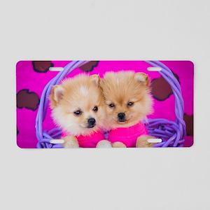 Two Pomeranian Puppies Wear Aluminum License Plate