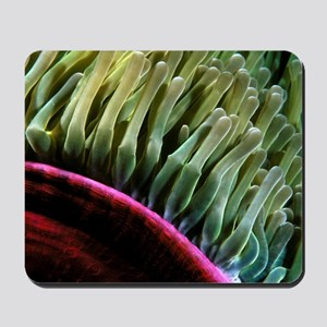 Sea Anemone Mousepad