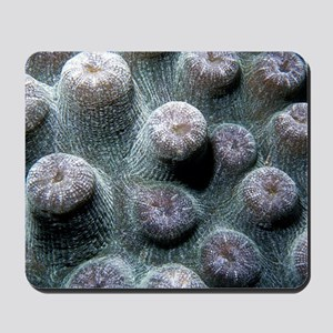Coral Abstract Mousepad