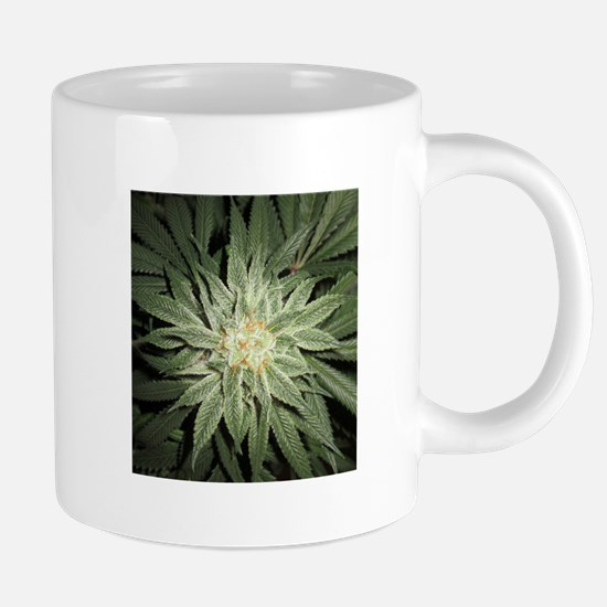 Cannabis Plant Mugs