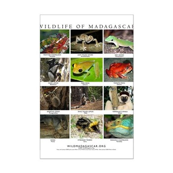 Wildlife of Madagascar Mini Poster Print