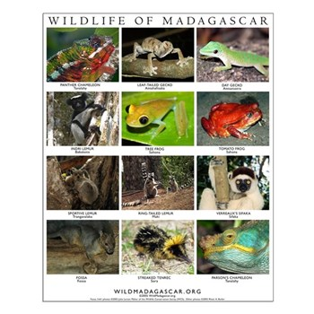 Wildlife of Madagascar Small Poster