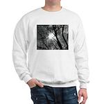 Urban Legend Sweatshirt