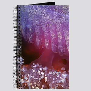 Jellyfish Abstract Journal