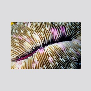 Mushroom Coral Rectangle Magnet