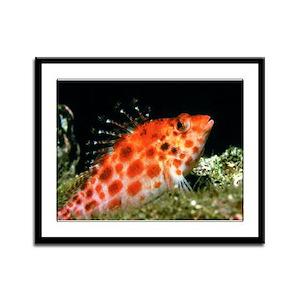 Coral Hawk Fish Framed Panel Print