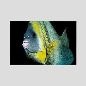 Cortez Angel Fish Rectangle Magnet