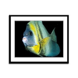 Cortez Angel Fish Framed Panel Print
