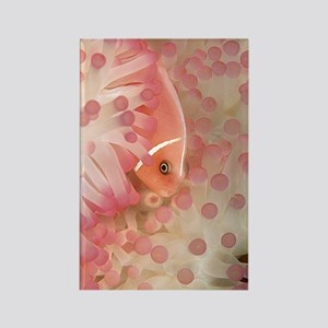 Pink Anemone Fish Rectangle Magnet