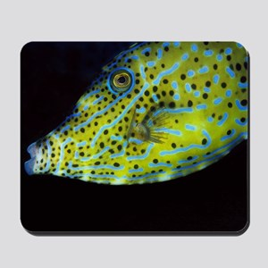 Scrawled File Fish Mousepad