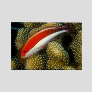 Freckled Hawk Fish Rectangle Magnet